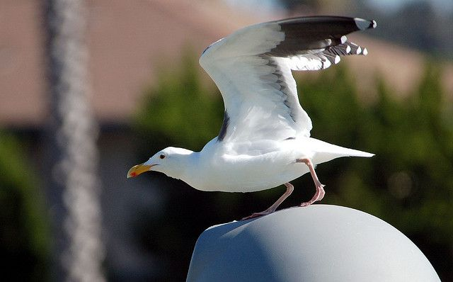 Leaping off the Can by hearman, via Flickr