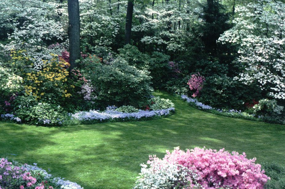 Backyard Landscaping For Privacy Landscaping With Rhododendrons And Azaleas Privacy Landscaping Large Backyard Landscaping Backyard Landscaping Designs