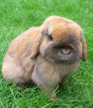 Gender Lennie Exerts A Feminine Characteristic When Wanting To Be The Care Giver Of His Rabbits Rabbit Cute Caregiver