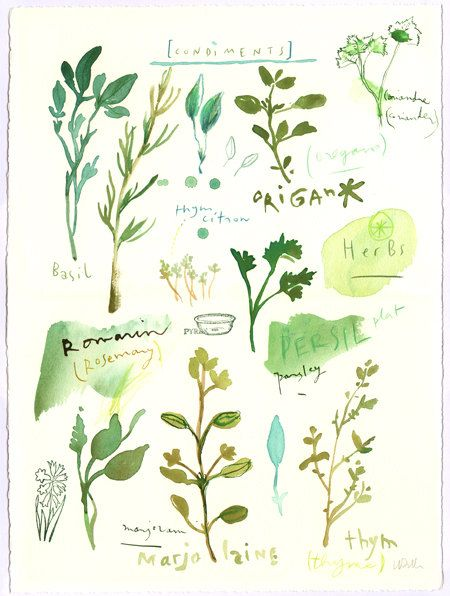 Herbs, original watercolor painting, Kitchen decor, Food art, Home and Garden, seasoning, green, plants. via Etsy.