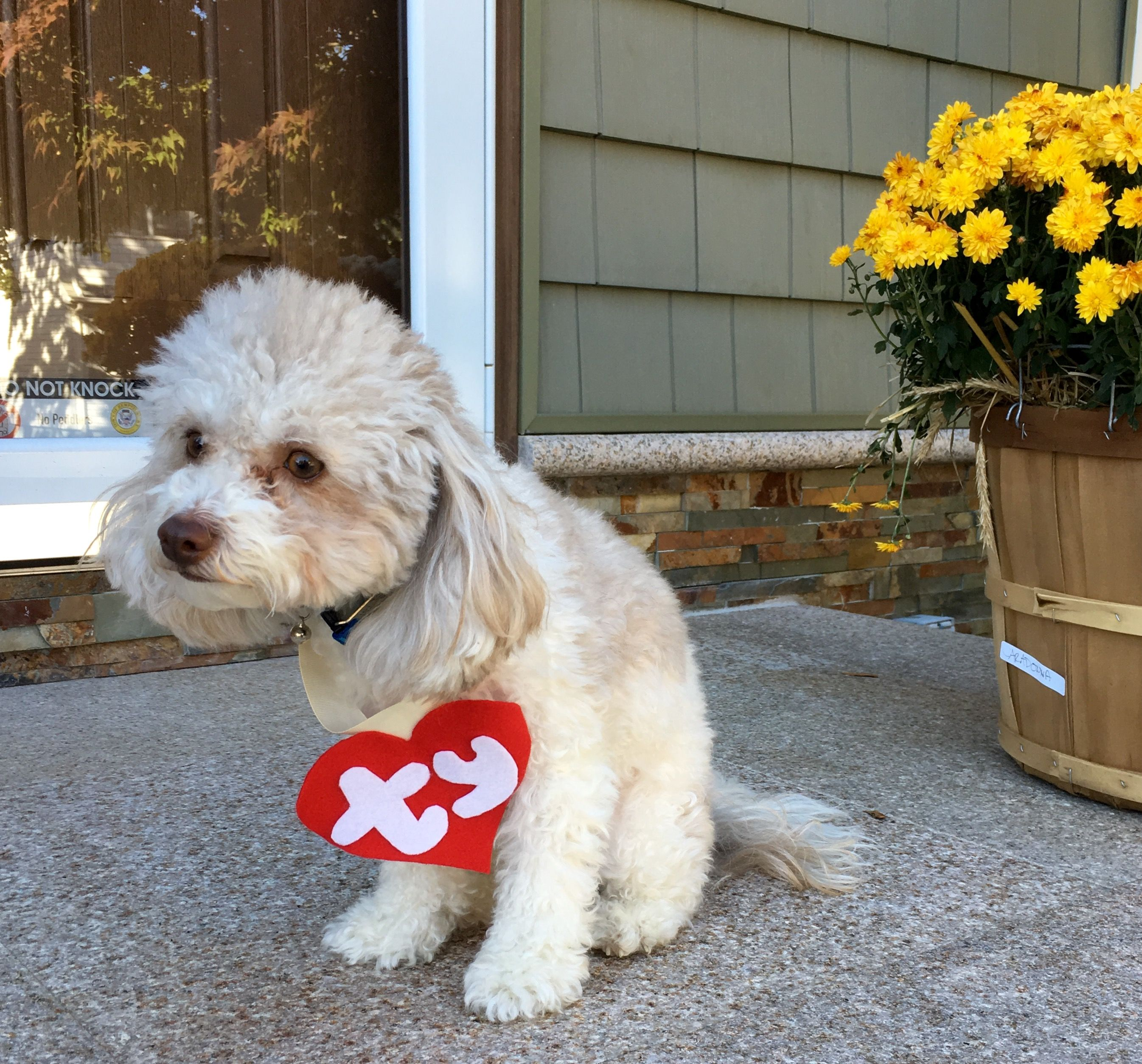 ty beanie baby halloween costume for dogs maltipoo