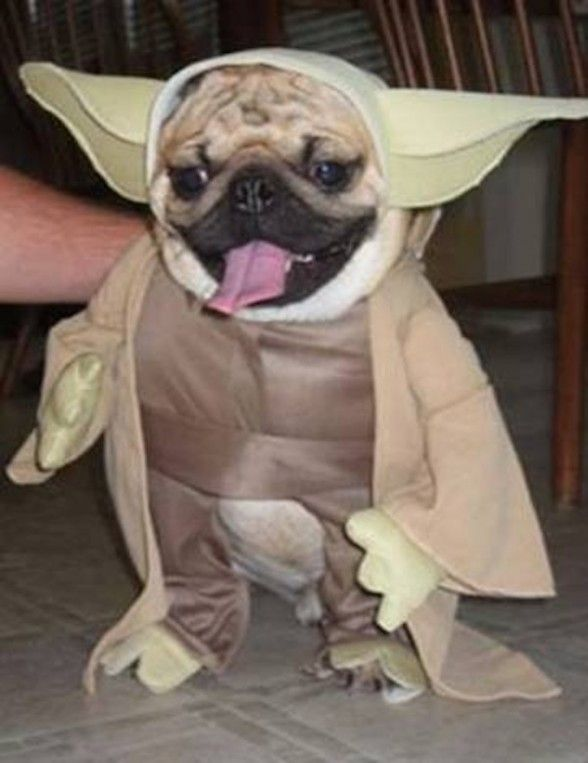 Welcome To The Bark Side Meet The Hilarious Star Wars Dogs Pet