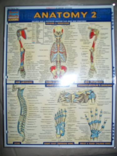 Barcharts Anatomy 2 Quick Study Guide | Anatomy and Textbook
