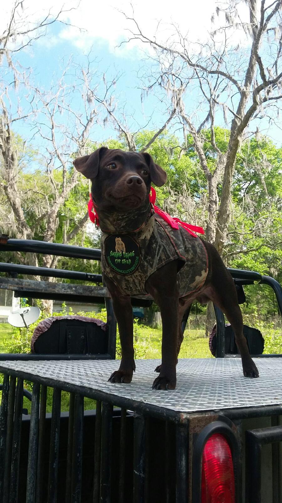 Boudin Patterdale hog dog | Louisiana Hog Hunting | Hog dog