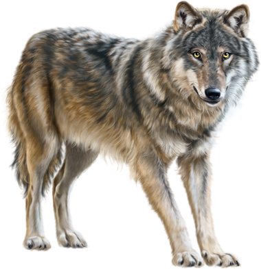 Loup Renard Wolf Fox Photos Animaux Sauvages Animaux Rares Animaux