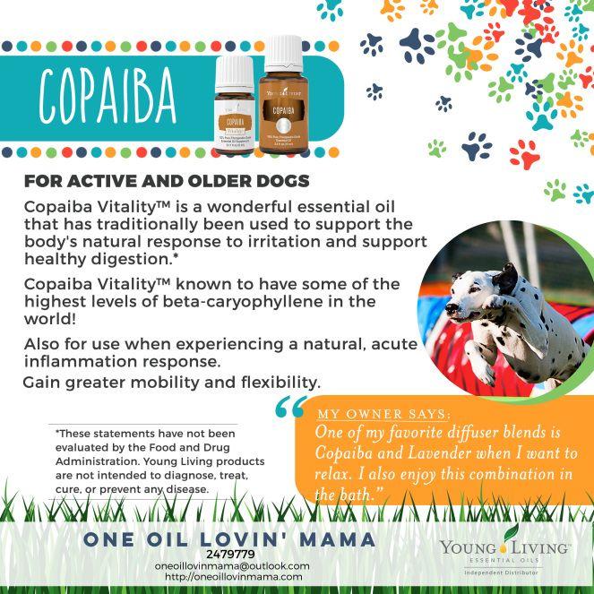 9-dogs-copaiba-new