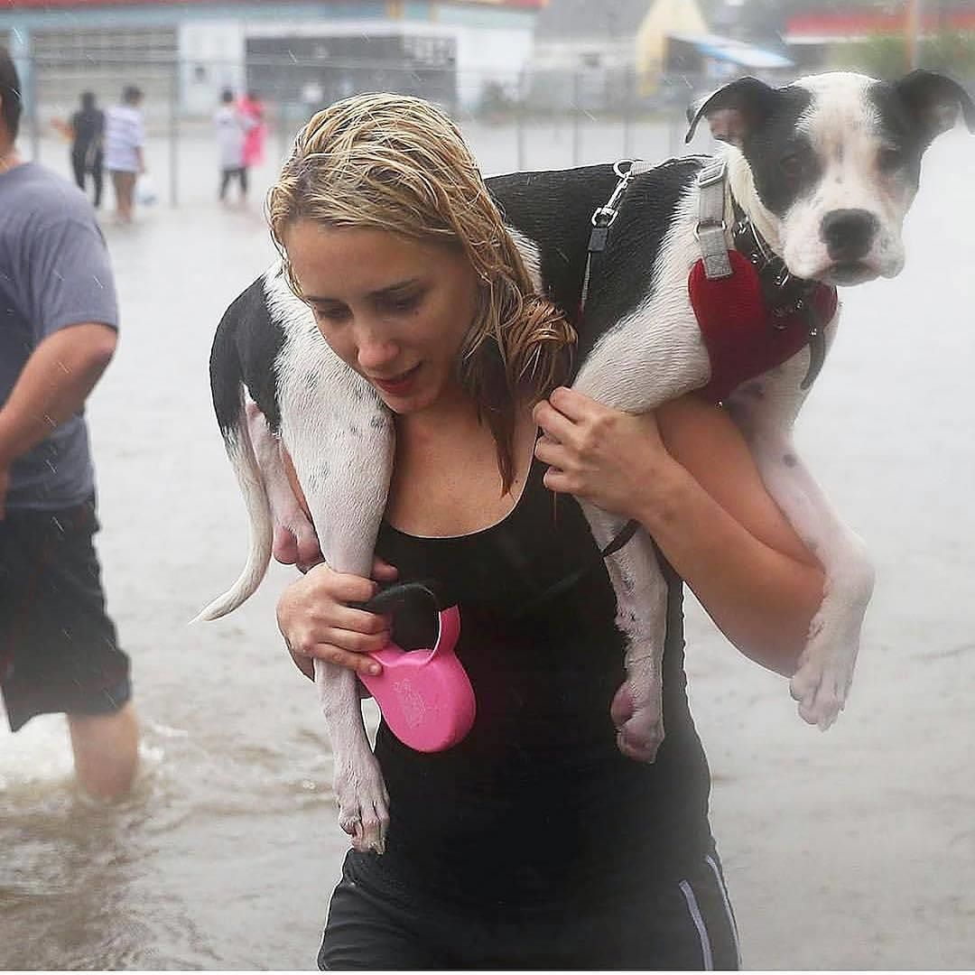 Houston pups and their people need our help! Through