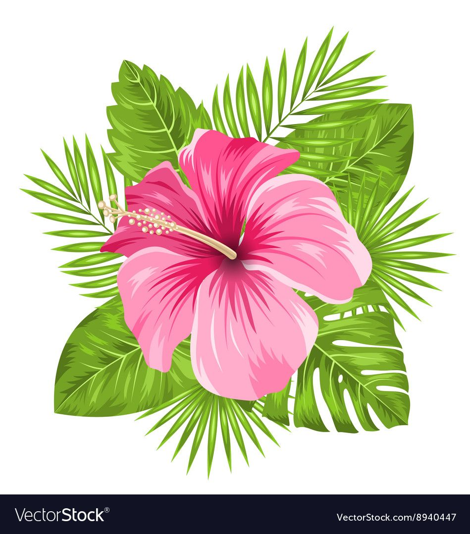 Beautiful Pink Hibiscus Flowers Blossom And Vector Image On Vectorstock Hibiscus Drawing Flower Drawing Flower Painting