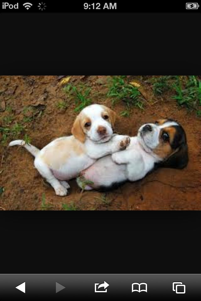 These look just like my two puppies!!!!!!!!!!!!!!!
