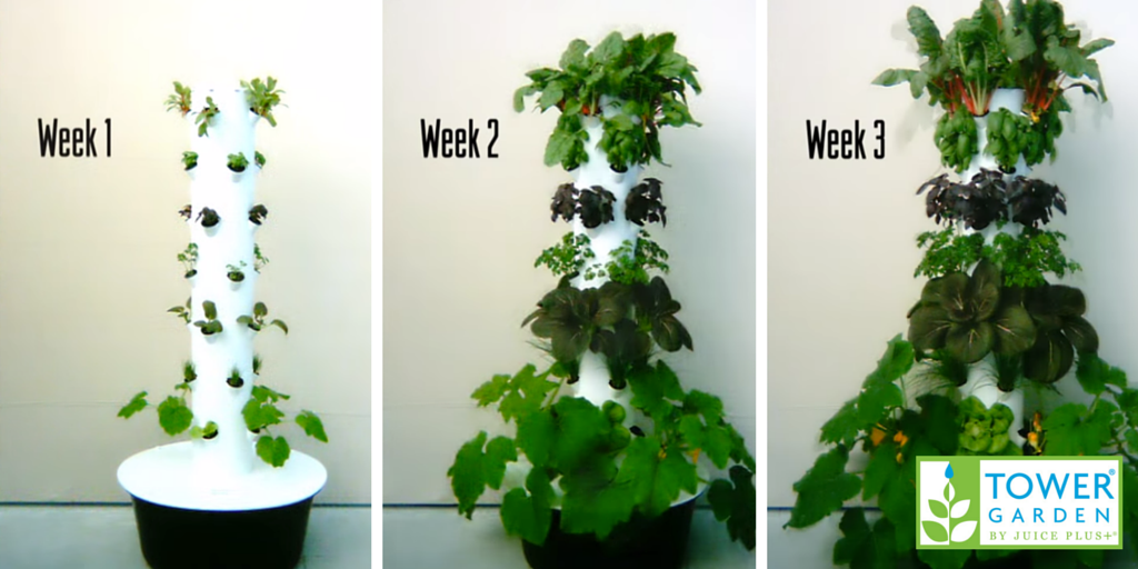 5 Research Backed Benefits Of Aeroponic Gardening Tower