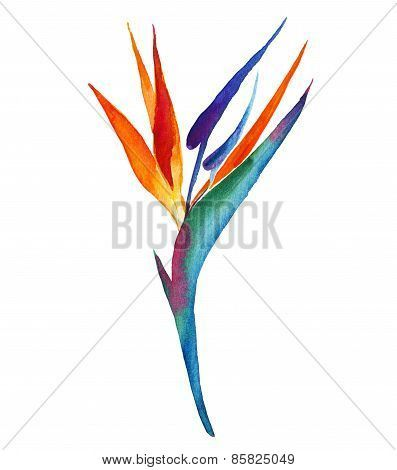 Image result for bird of paradise flower drawing
