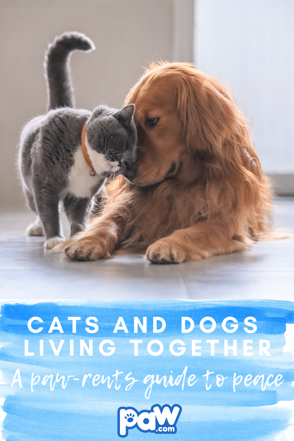 Cats And Dogs Living Together A Pawrent S Guide To Peace In 2020 Dog Cat Dogs Cats