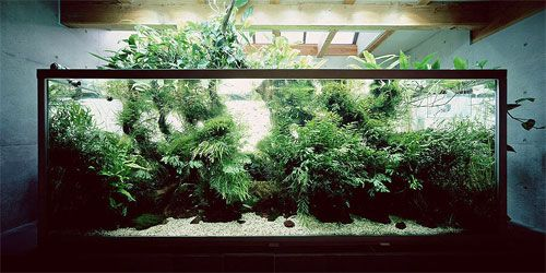 17 Best 1000 images about Aquariums on Pinterest Fish tanks