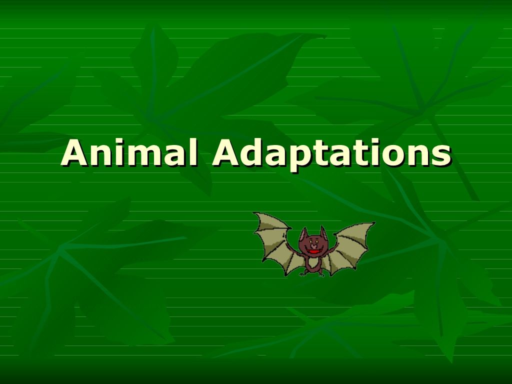 Animal Adaptations I