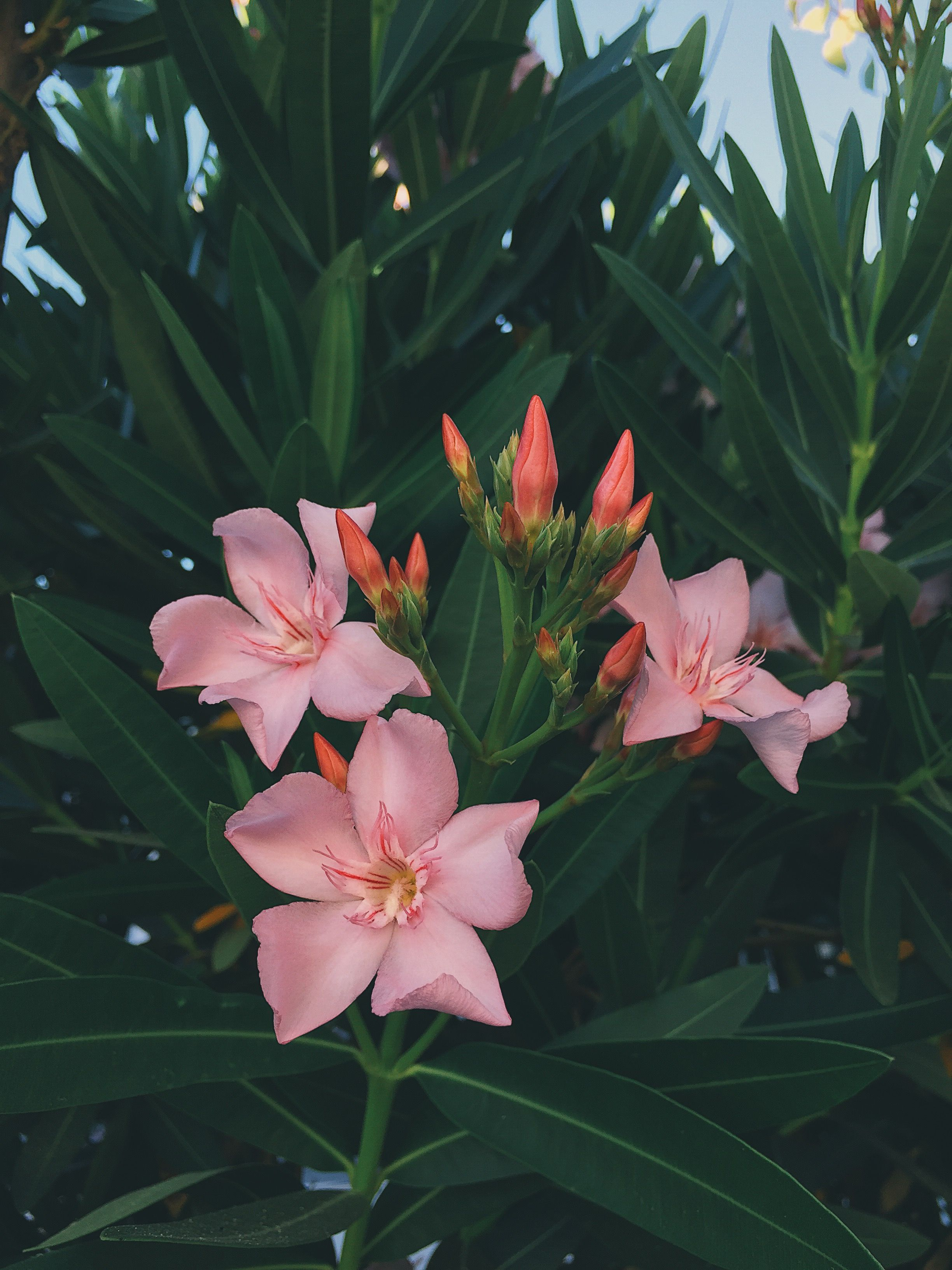 Pink Flowers Aesthetic Nature Vsco Photography Pretty Tumblr Flower Aesthetic Plant Aesthetic Tumblr Flower