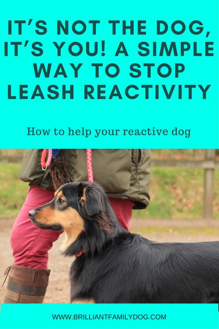 Fearful Dog Training Enrichment For Fearful Dogs Reactive Dog