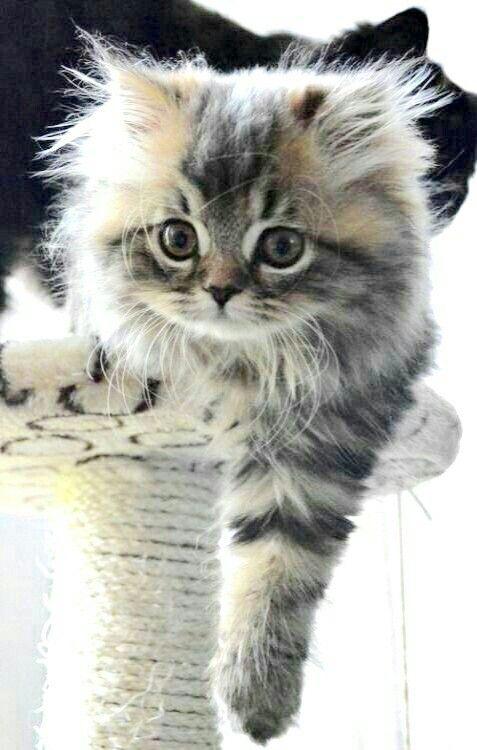 Pin By Cat Depot On Cute Kittens Kittens Cutest Cute Cats Cats