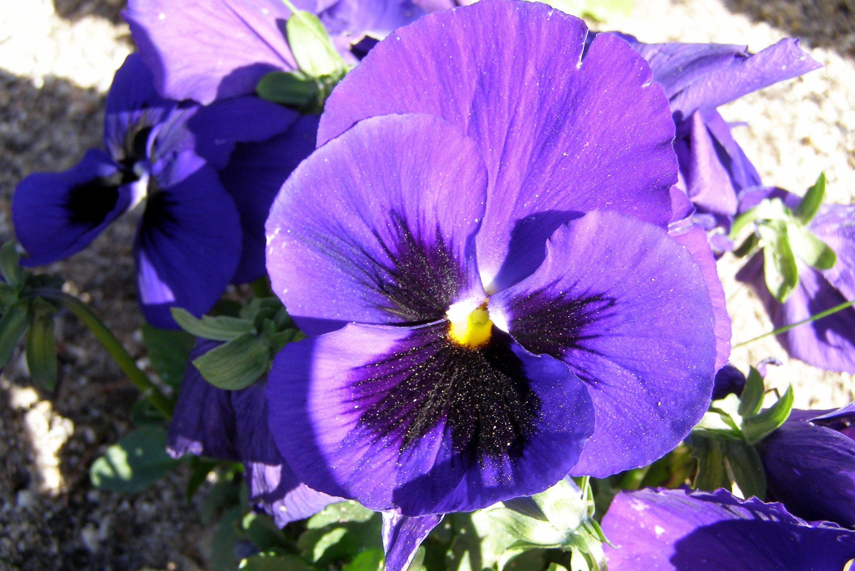Flor morada