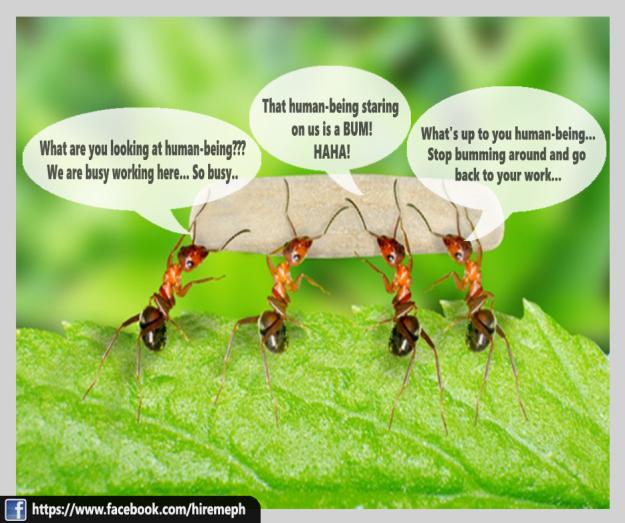 Ants at work! Do not disturb! | Disturbing, Work, Job website