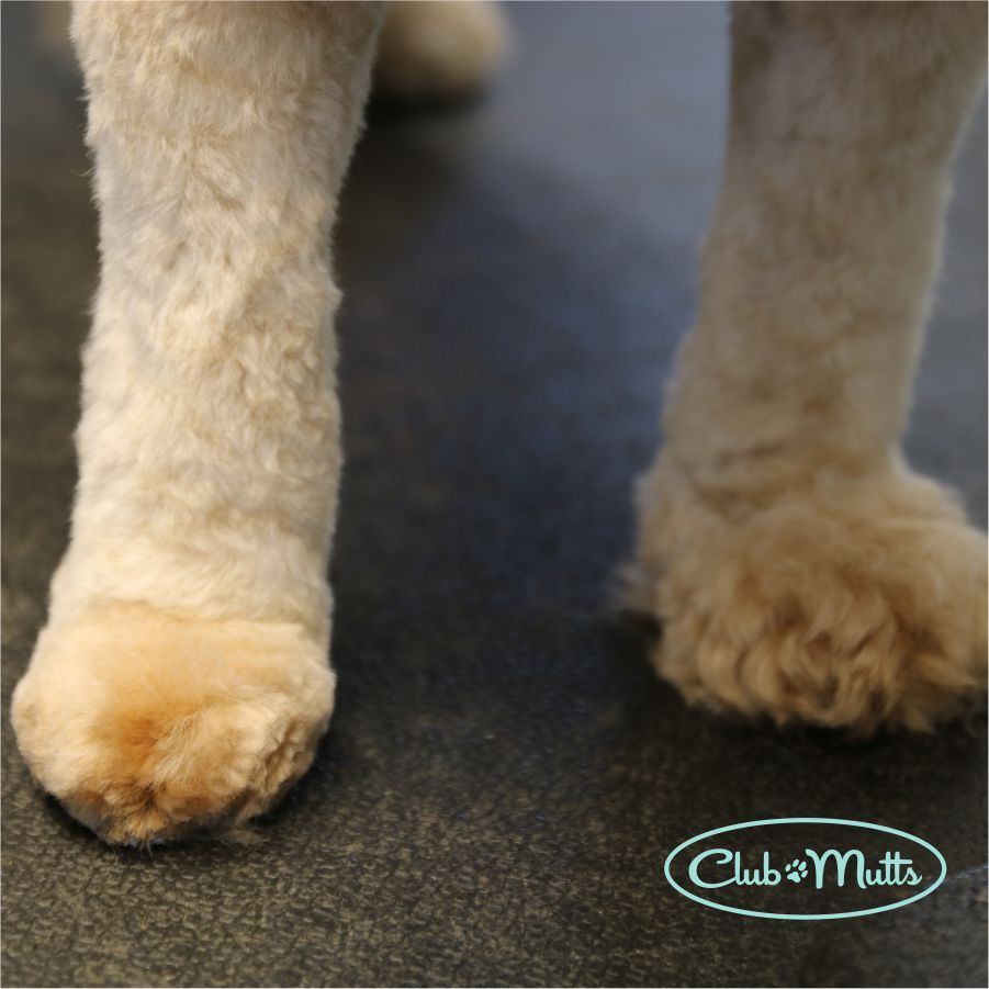 Before and after. Now that's a pampered paw! Schedule your