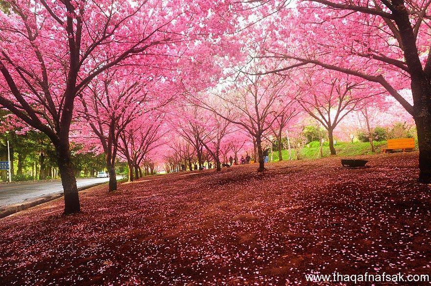 صور الطبيعة الخلابة بمناسبة دخول فصل الربيع Beautiful Landscapes Landscape Blossom Trees