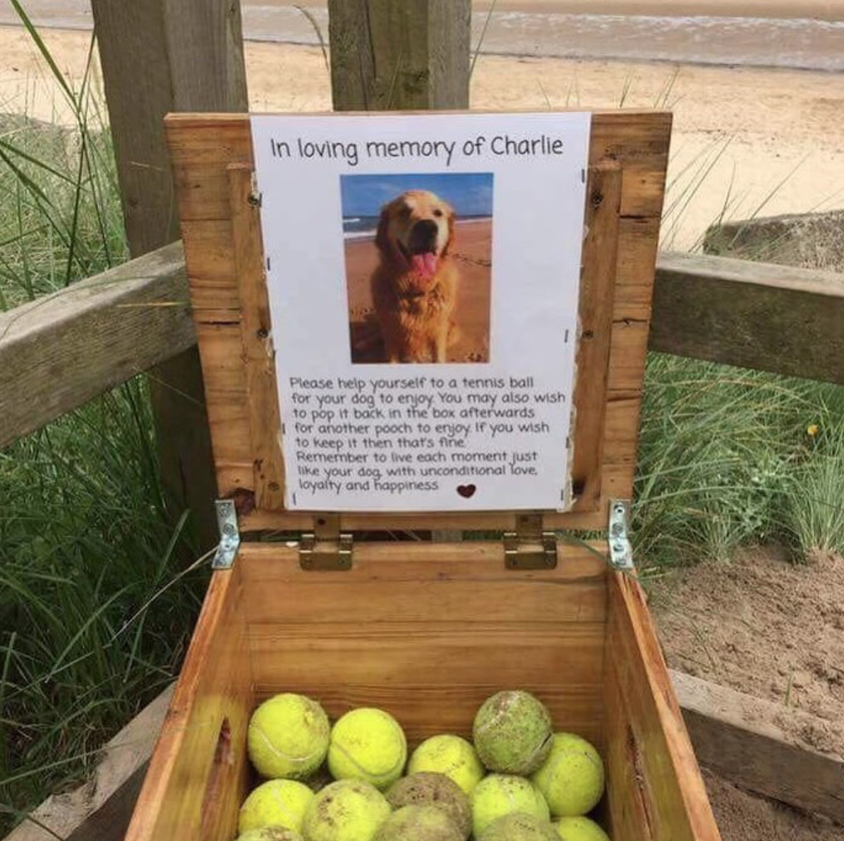 At a beach in Northumberland, England, you can borrow, take or give a tennis ball for doggos to play... - #babyanimalgifs #balls #beach #dogs #northumberland #photo #tennis