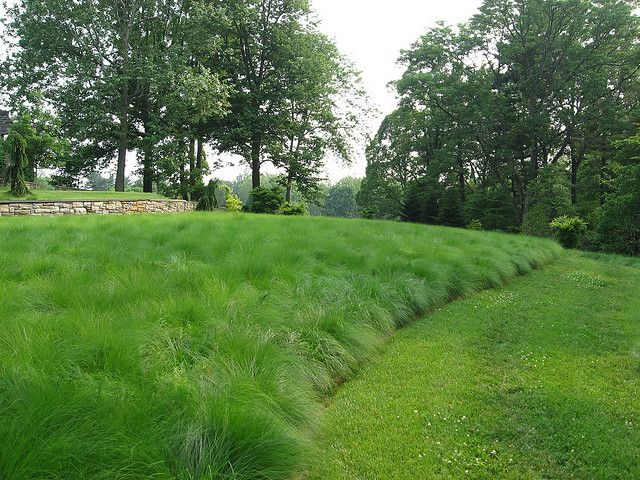 Dropseed Prairie At Chanticleer Landscape Design Grasses Landscaping Garden Landscape Design