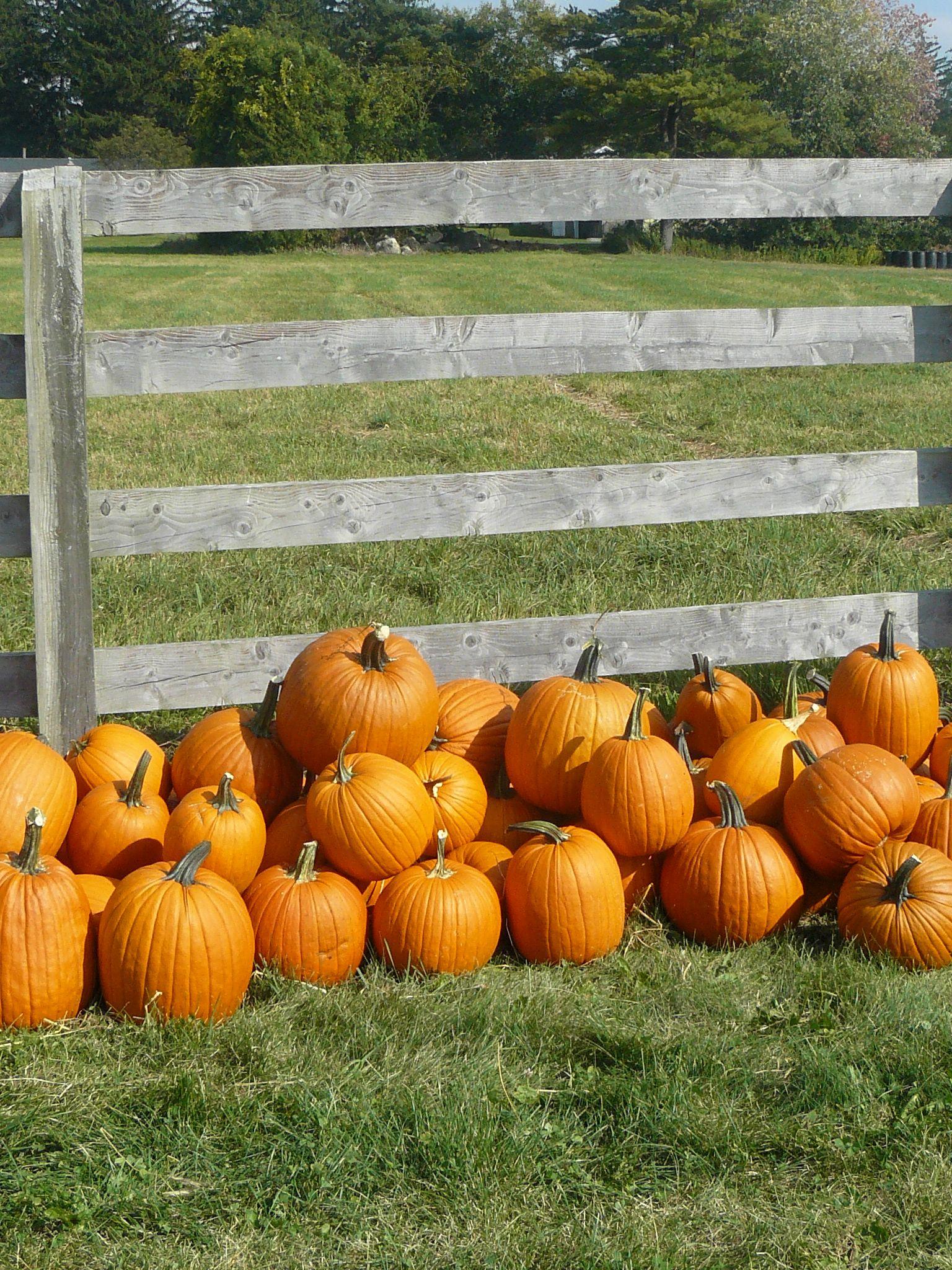 Pumpkins Pumpkin, Harvest season, Autumn destinations