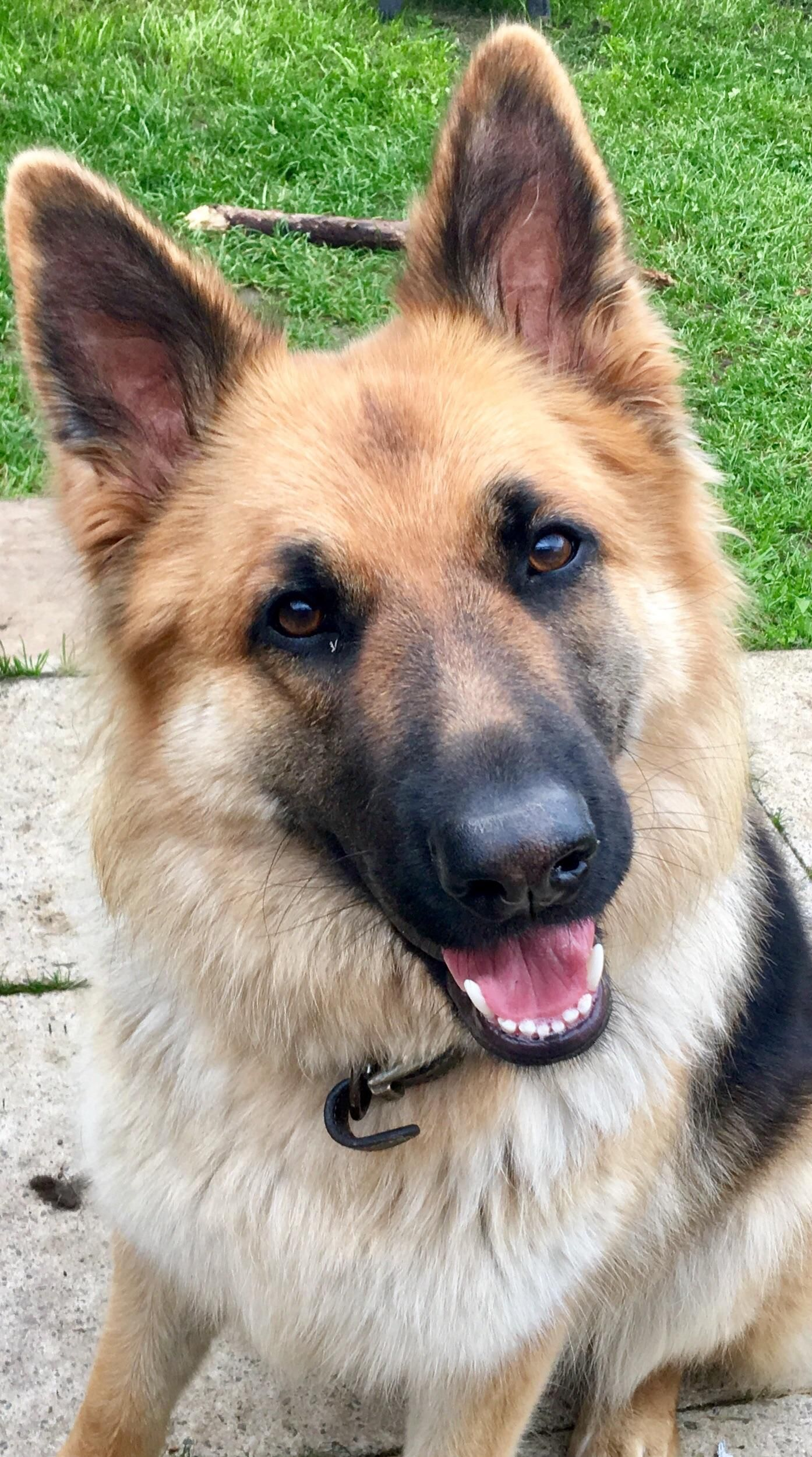 Meet Rio At 12 Months Storyful Dog Best Pinterest Dog Profile