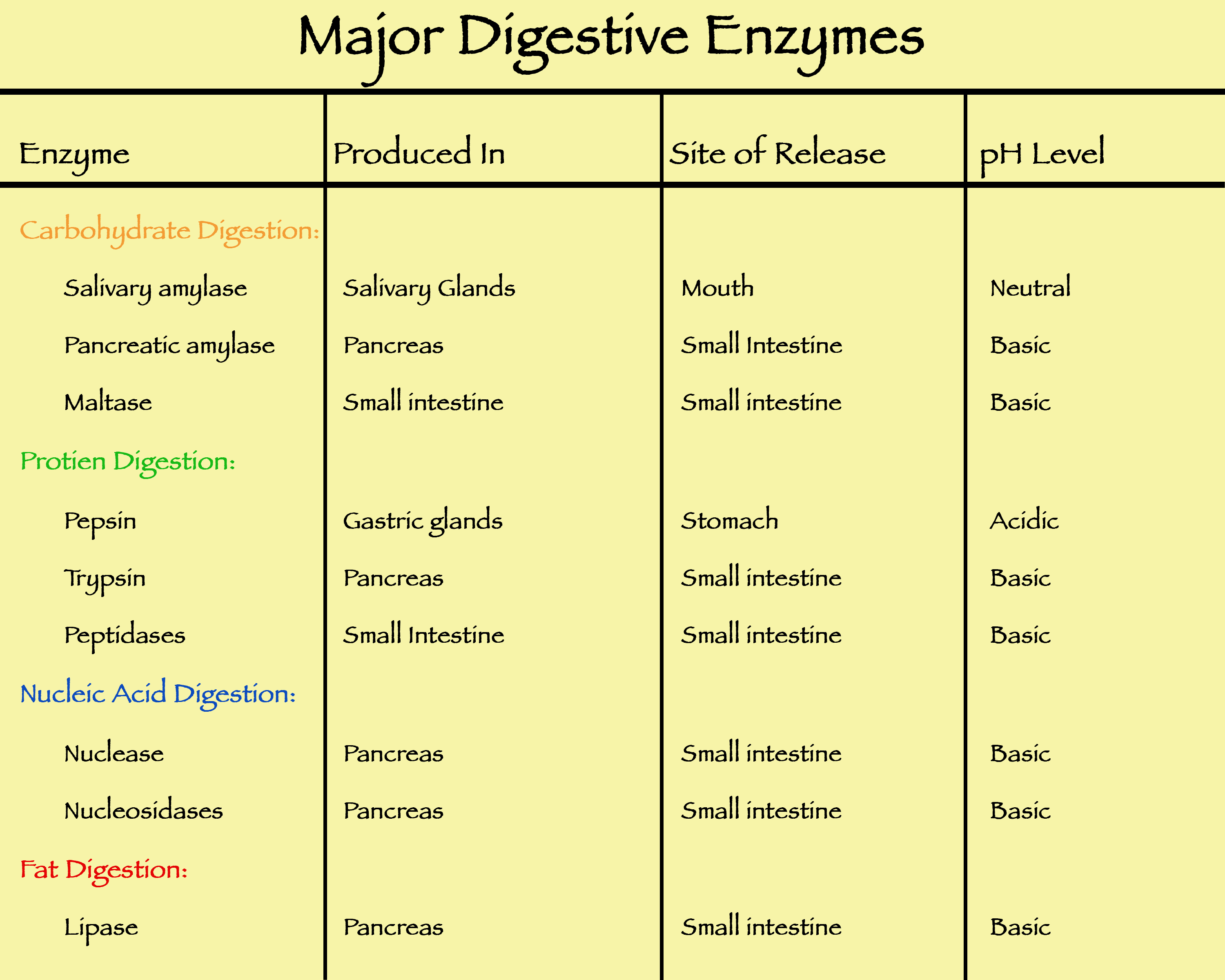 Digestive Enzymes Human Digestive System Digestive Enzymes Carbohydrates Biology