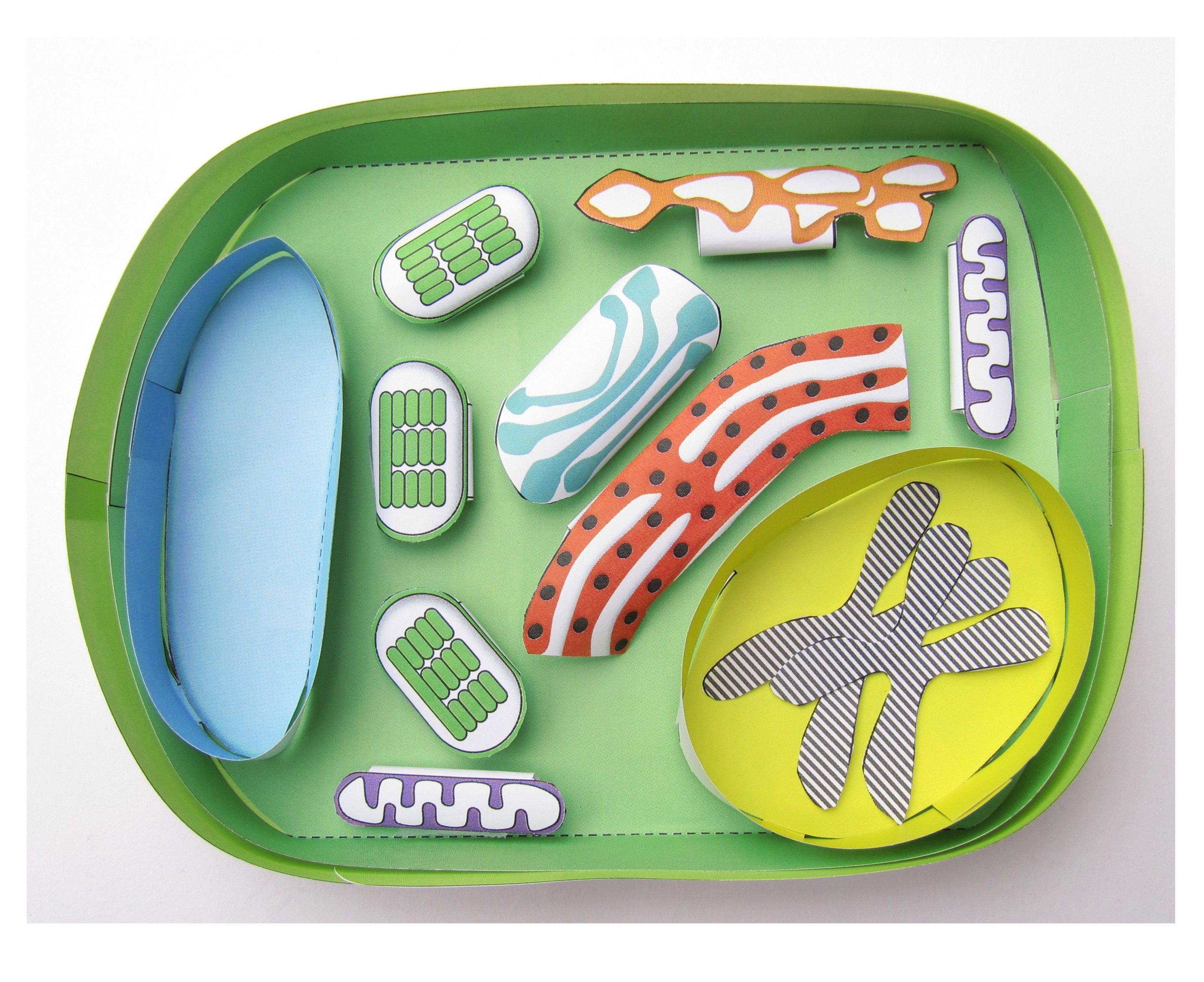 Our easy to make downloadable paper model of a plant cell ...