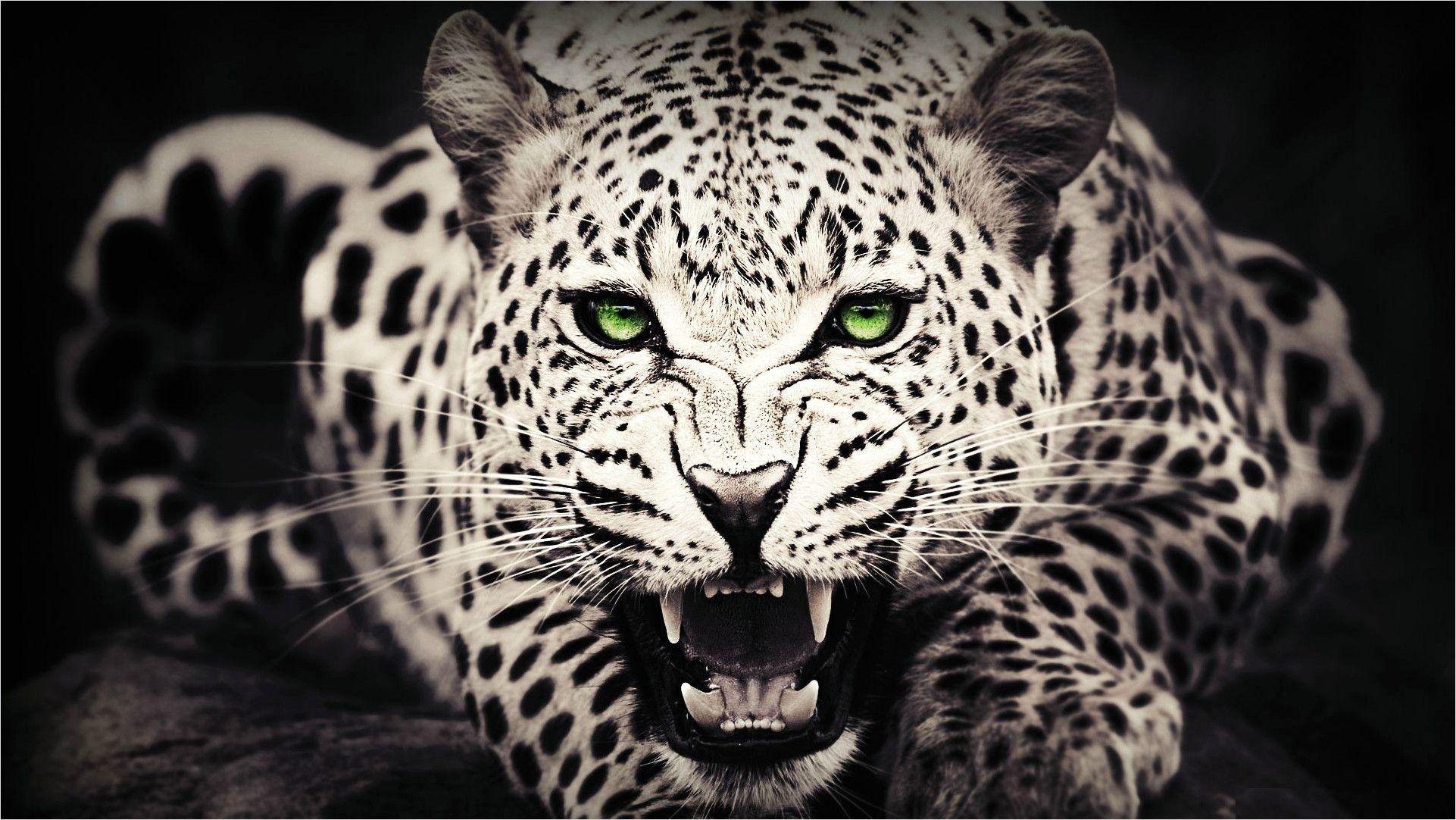 4k Animal Wallpaper For Laptop in 2020 Cheetah wallpaper