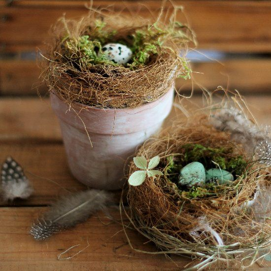 Bird nests: Variety is Key for the world's avian ...