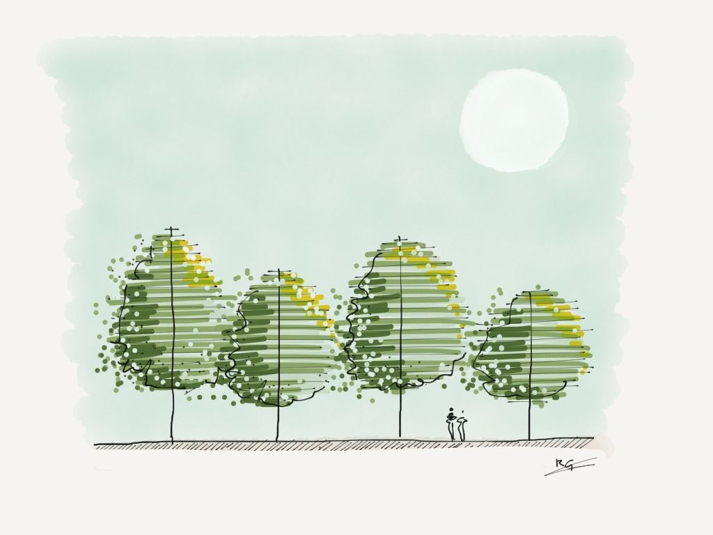 Architecture Drawing Of Trees dicky goldthorpe's idea on | sketches, architecture and landscaping