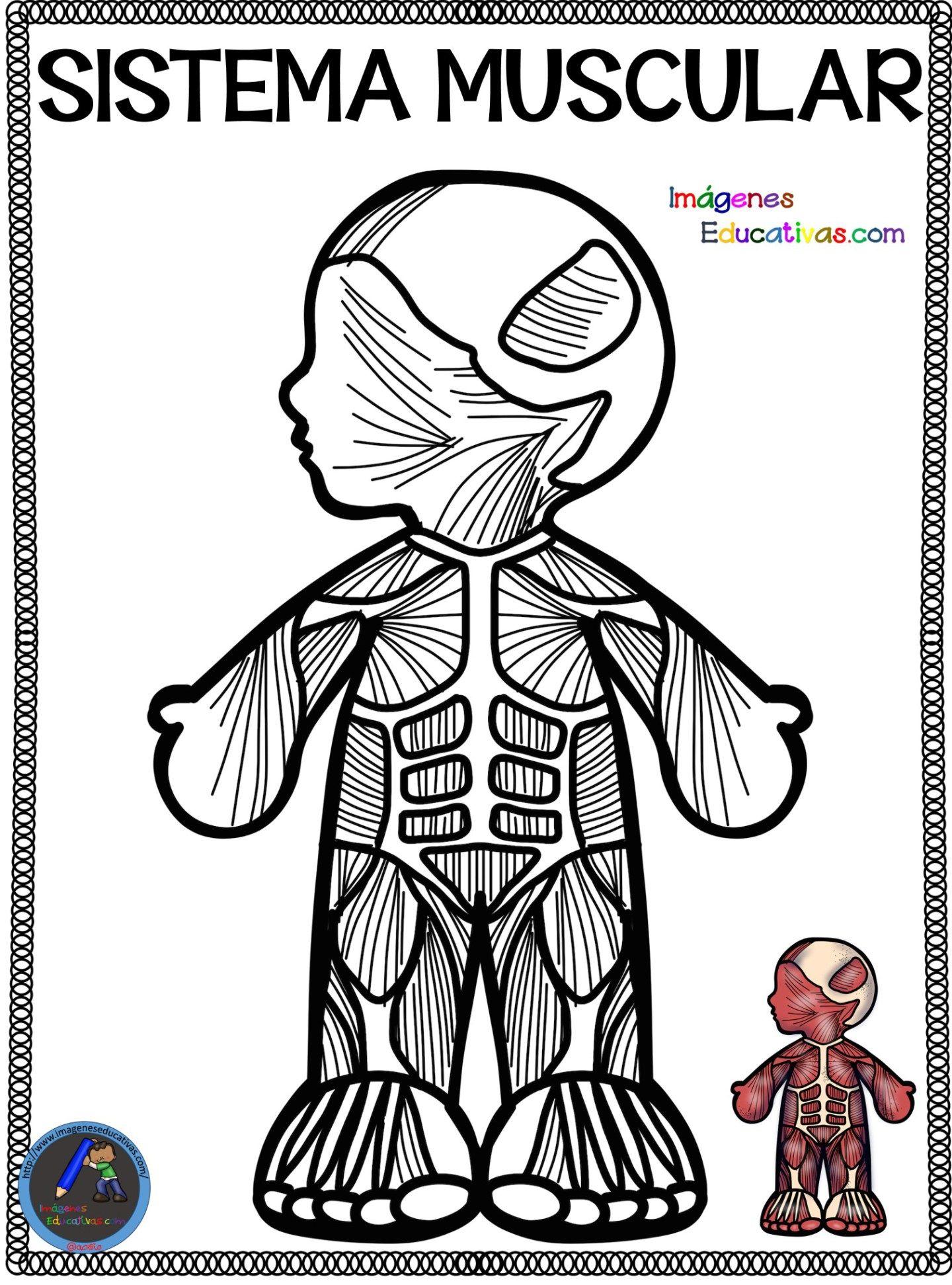 Cuaderno del Cuerpo Humano para colorear | Aparatos del cuerpo humano, Cuerpo  humano para niños, Cuerpo humano
