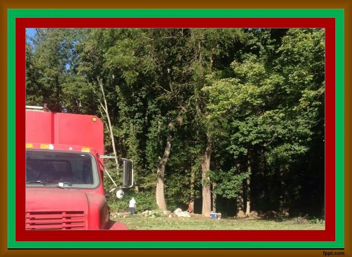 Tree Trimming Millersville Tree trimming, Tree, Tree service