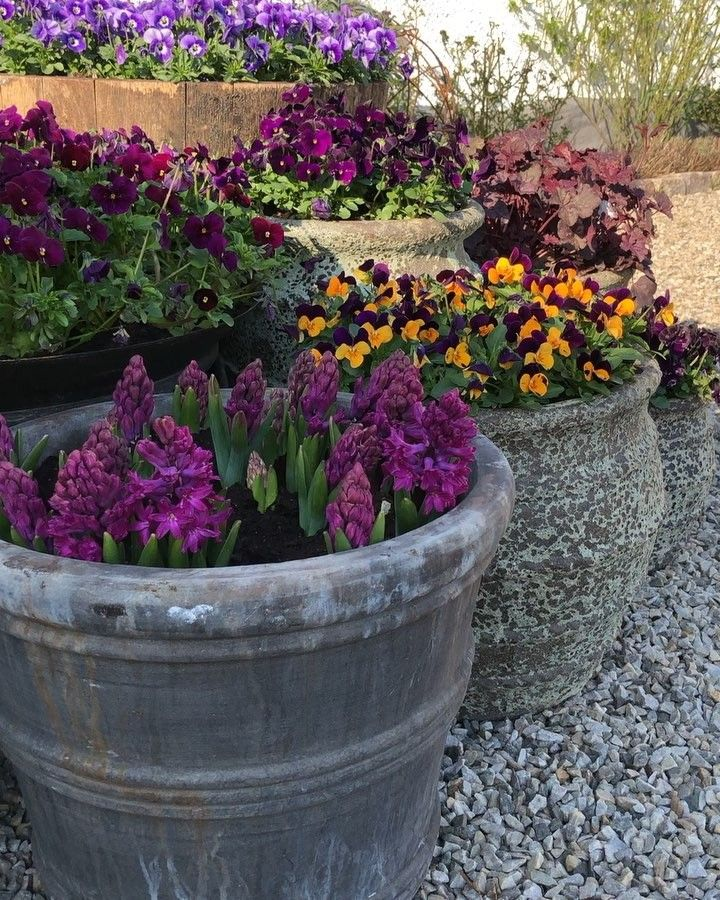 Pin on Hanford winter flower pot ideas
