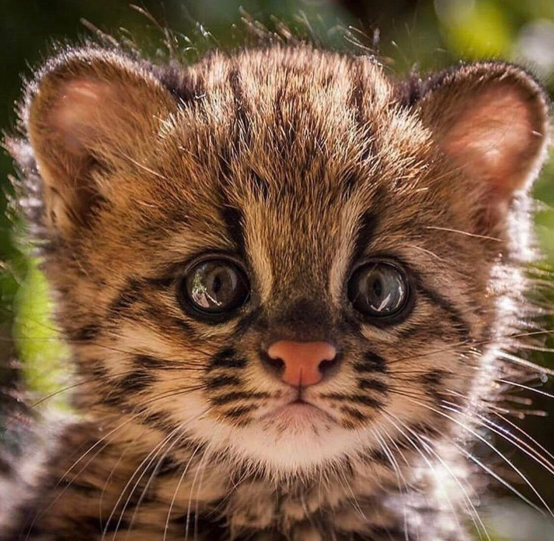 Cute animals image by Max Martinez Baby animals funny