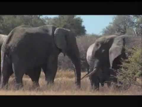 Si no les importan los elefantes...¿Les importamos nosotros.