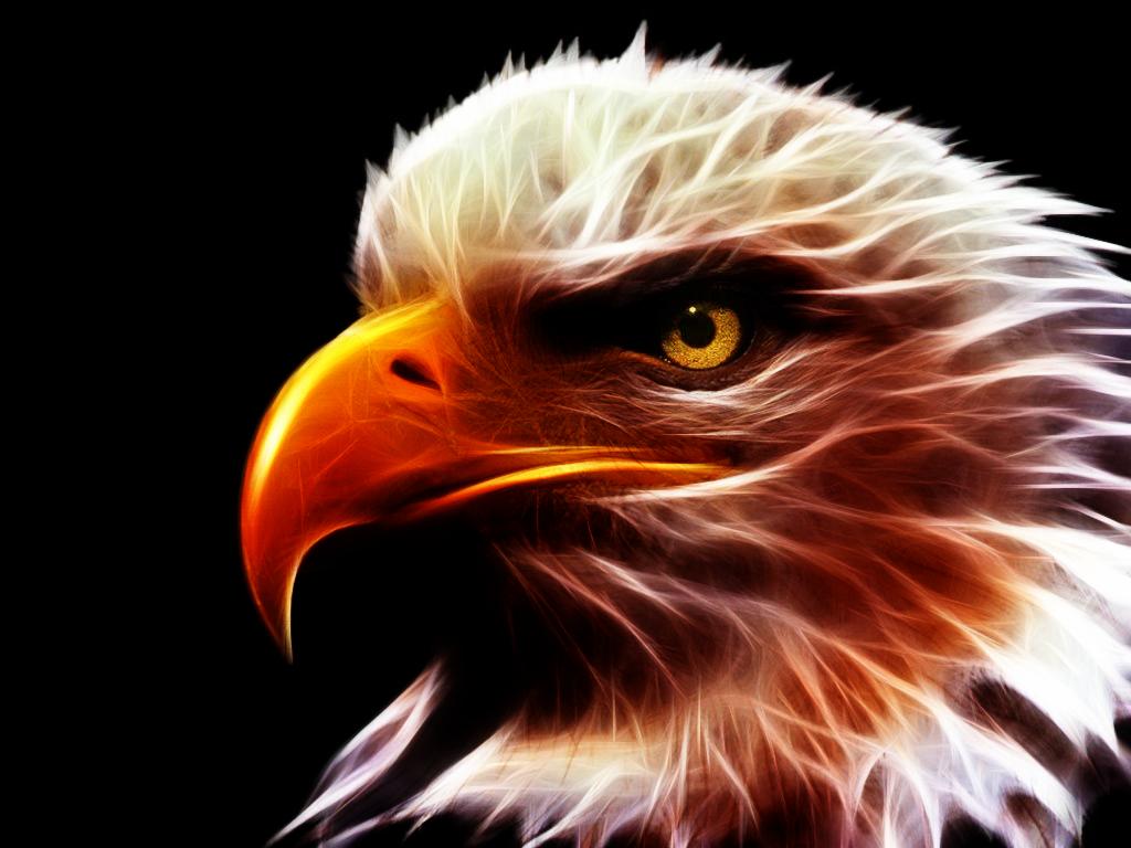 Крутые картинки птиц