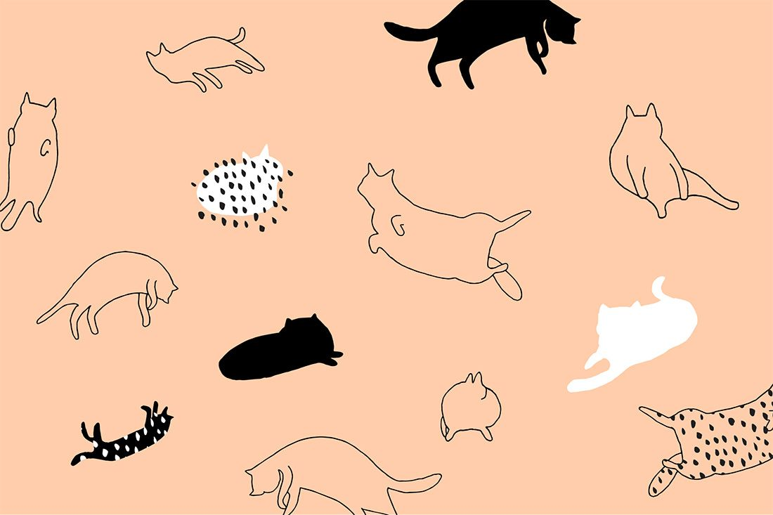 These Cat And Corgi Desktop And Smartphone Wallpapers Will Give