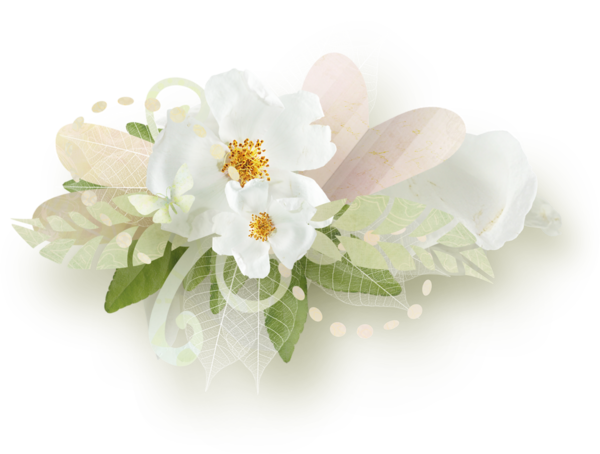 Screen Shot 2018 05 06 At 10 16 54 Am Png White Roses White Flowers Pansies Flowers