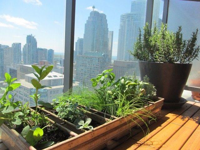 Kast Voor Balkon : Kräuter balkon idee pflanzen holz kasten rosmarin kräuter
