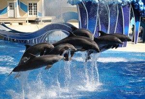 6 Animals to Meet at SeaWorld Orlando