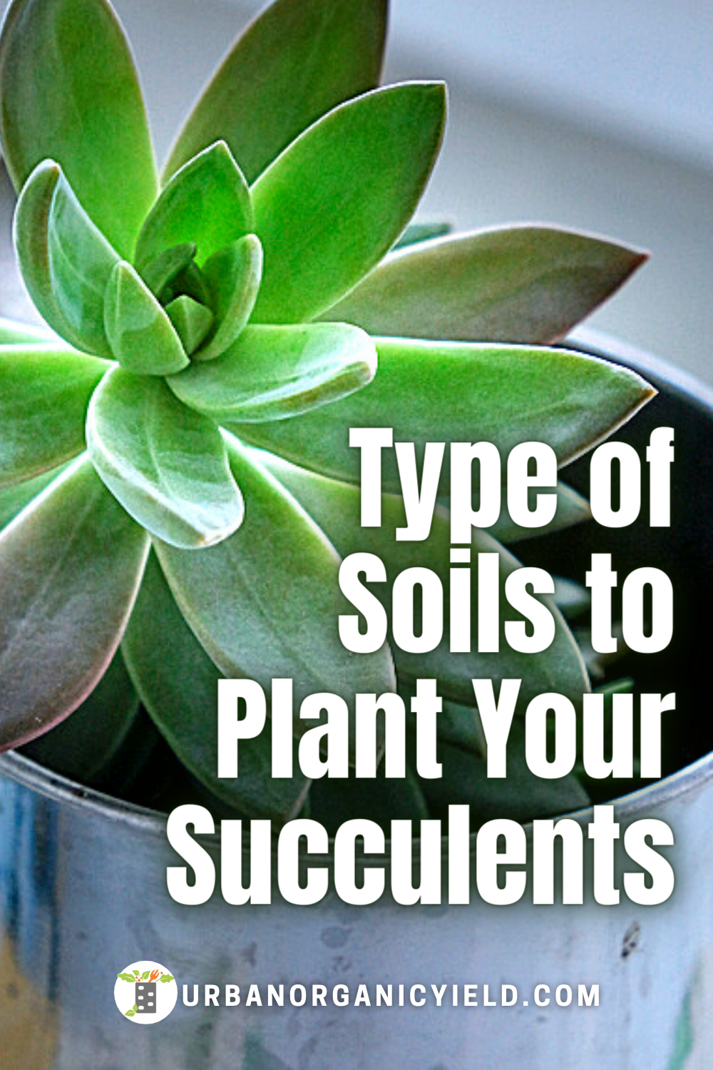 What is the best potting soil for succulents? What kind of soil for succulents? We show you how to make potting soil for succulents and DIY your own recipe mixture. Also, the soil layers for succulents is important. Succulent soil is where the sucuulent house plant lives and provides the network for water and air so the roots can grow. Succulent soil also feeds the house plant the nutrients it needs. #Succulents #Plants #Houseplant #IndoorGarden #Gardening #UrbanOrganicYield