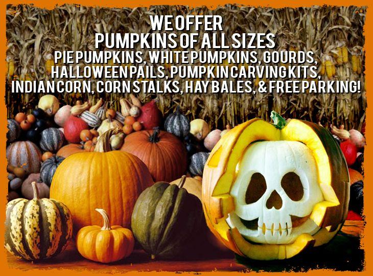 Pumpkins Chicago A Nightmare on Clark Street Pumpkin