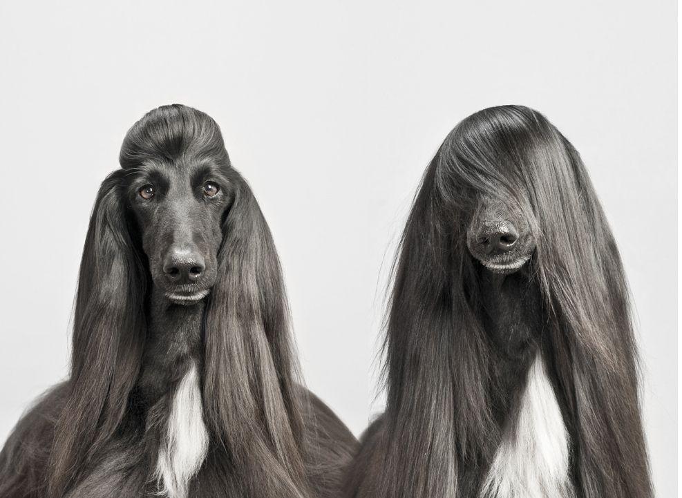 Jive By Pablo Axpe 500px Afghan Hound Dog Haircuts Beautiful Dogs