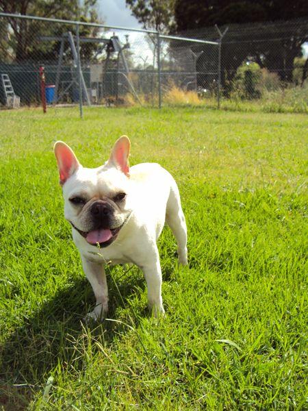 Dog Friendly Caravan Parks In Australia Xtend Outdoors Pet