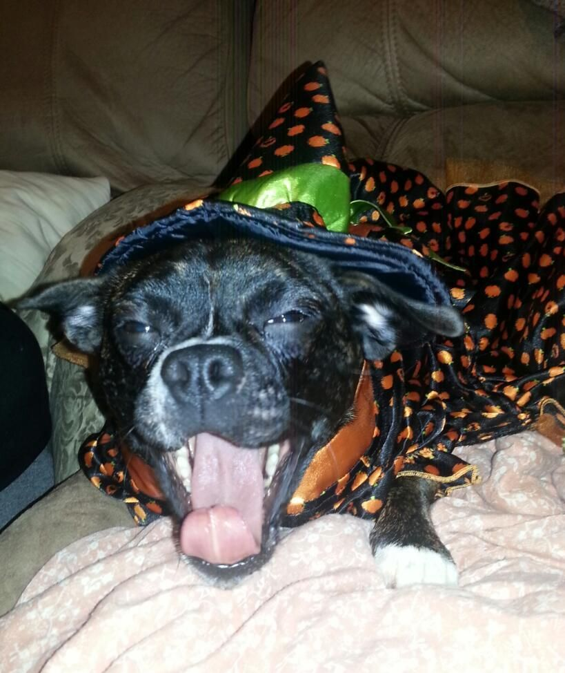 I Just Voted For My Pet In The Pet Supplies Plus Howl O Ween Photo