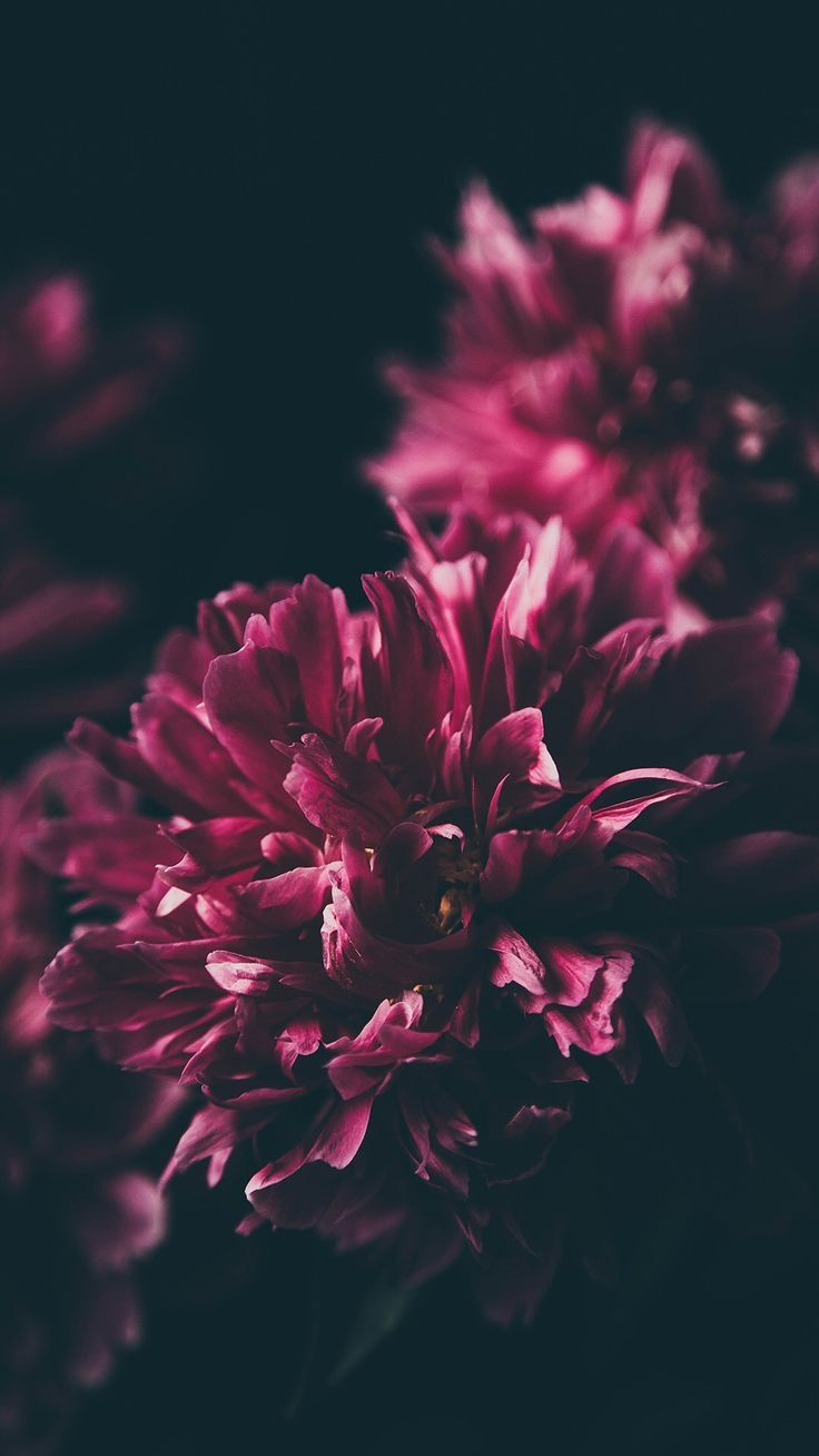 Flowers #lockscreen #wallpaper #background #iphonelockscreen